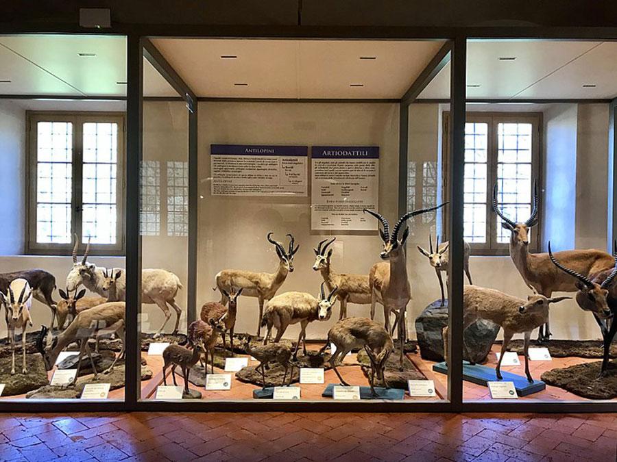 Mammals Gallery - Natural History Museum of Pisa University